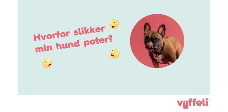 Hvorfor slikker min hund sine poter? og fransk bulldogVuffeli hundeblog