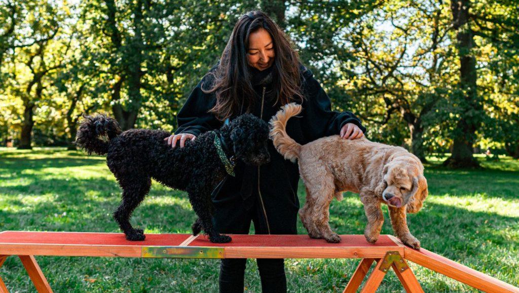 pige træner to hunde på agilitybane