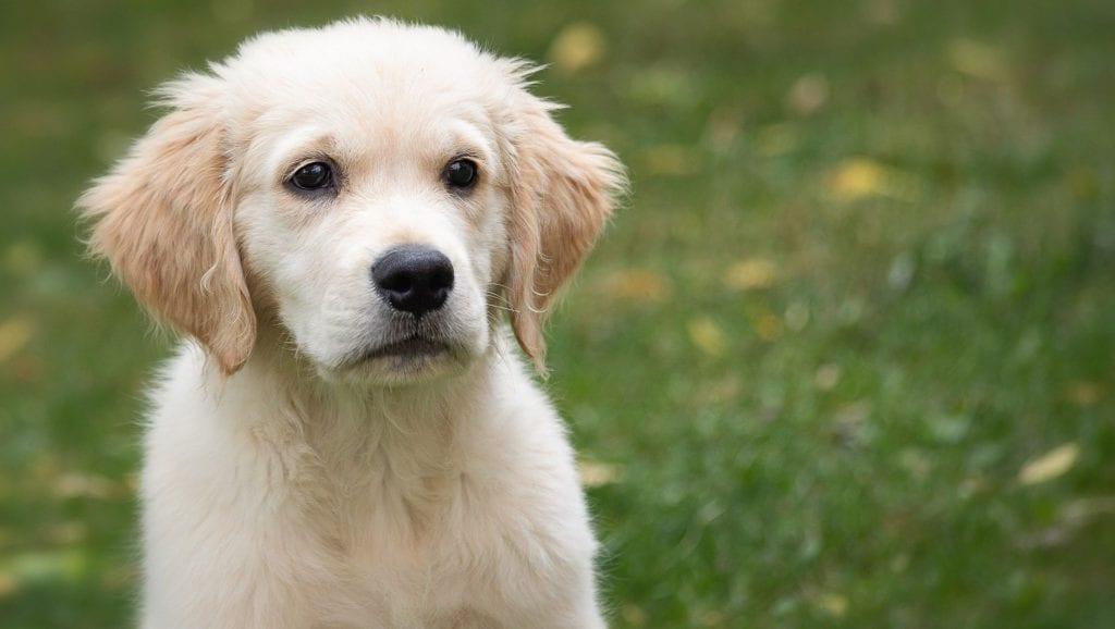 hvalp i havenVuffeli hundeblog