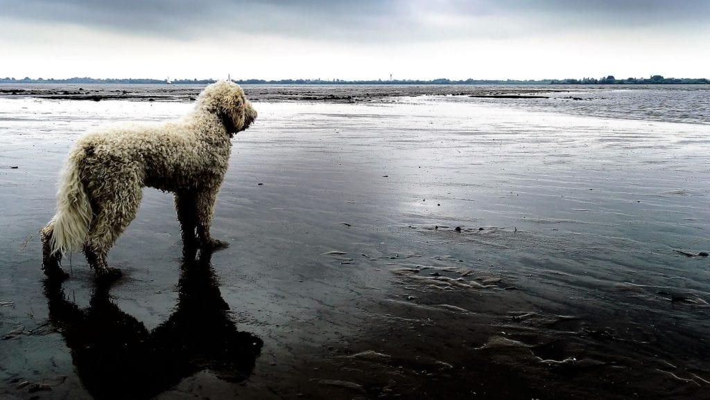 hund på frossen vandVuffeli hundeblog