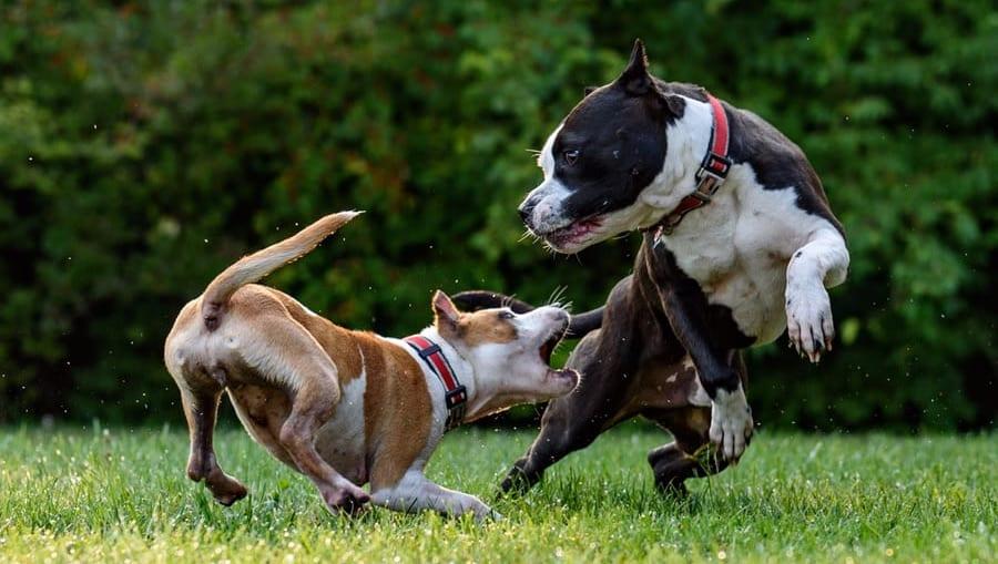 hunde leger meget aktivtVuffeli hundeblog