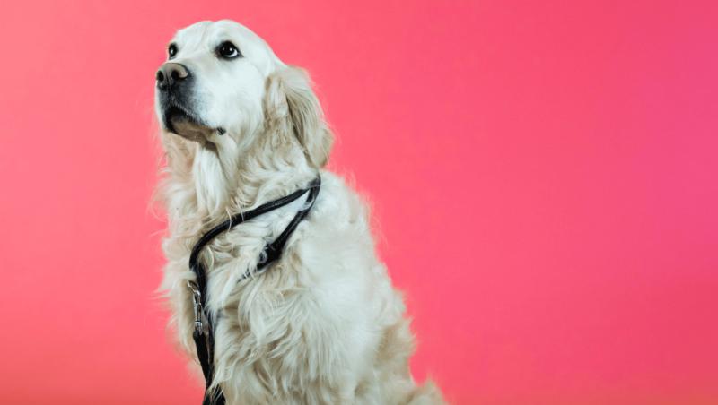 hund snor om halsenVuffeli hundeblog