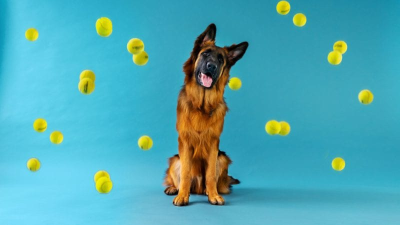 hund og bolde i luftenVuffeli hundeblog