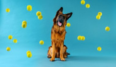 hund og bolde i luften