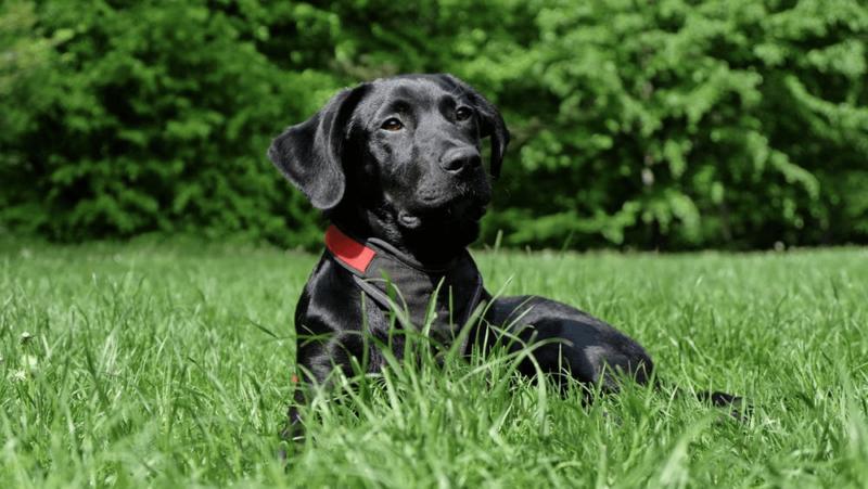 hund i græsVuffeli hundeblog