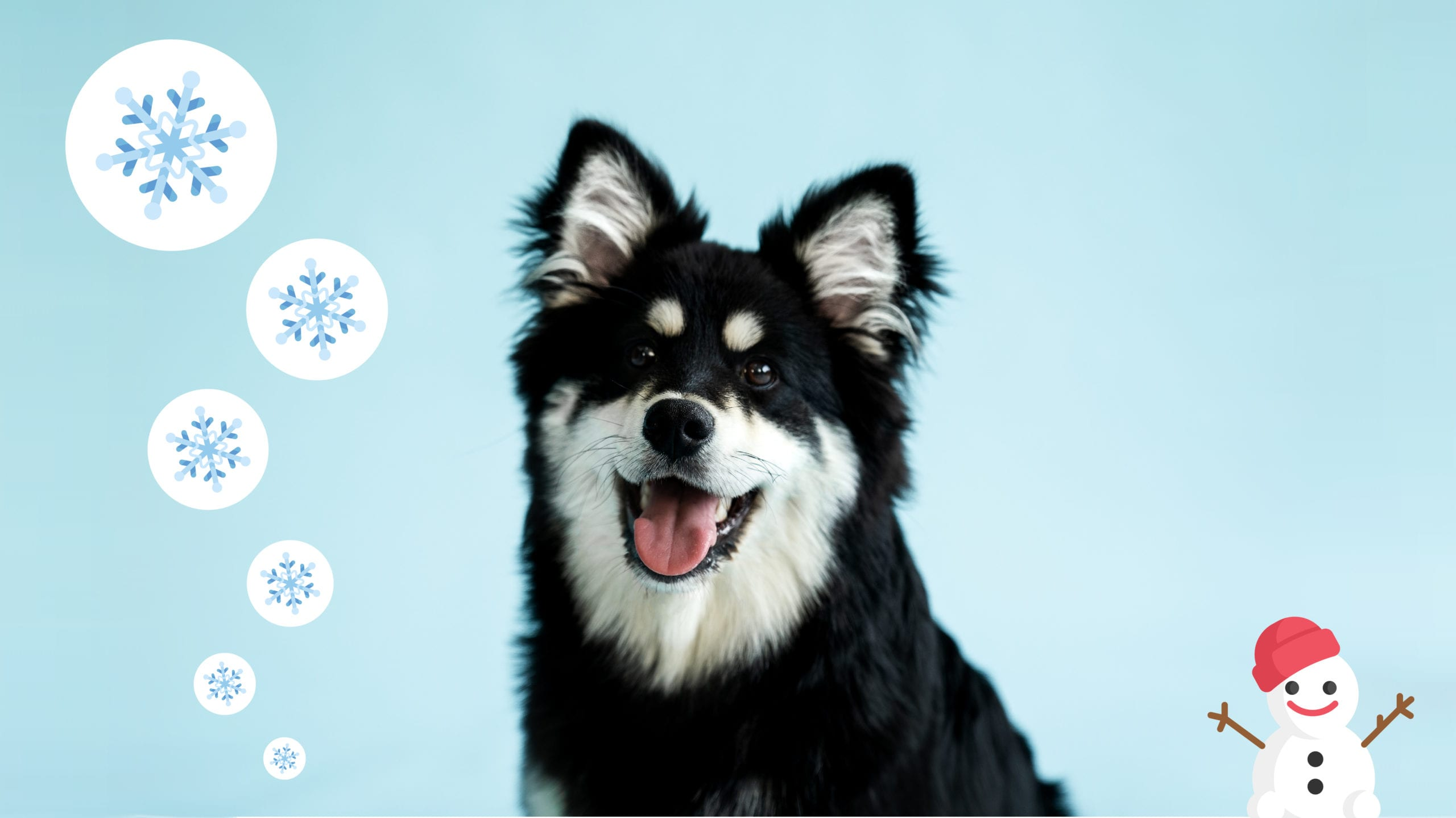 hund, vinter, sne og snemand