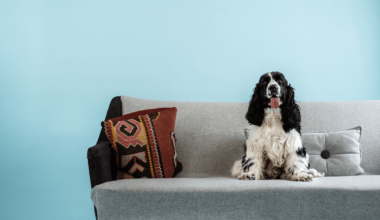 hund sidder i sofaen