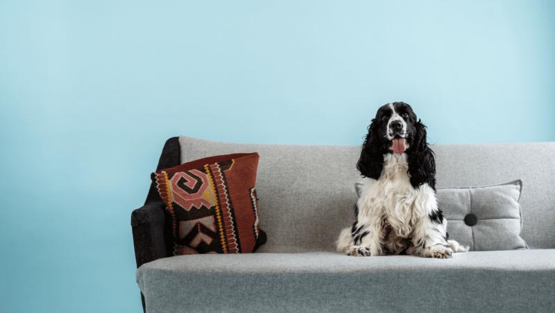 hund sidder i sofaenVuffeli hundeblog