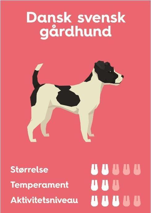 dansk-svensk gaardhund