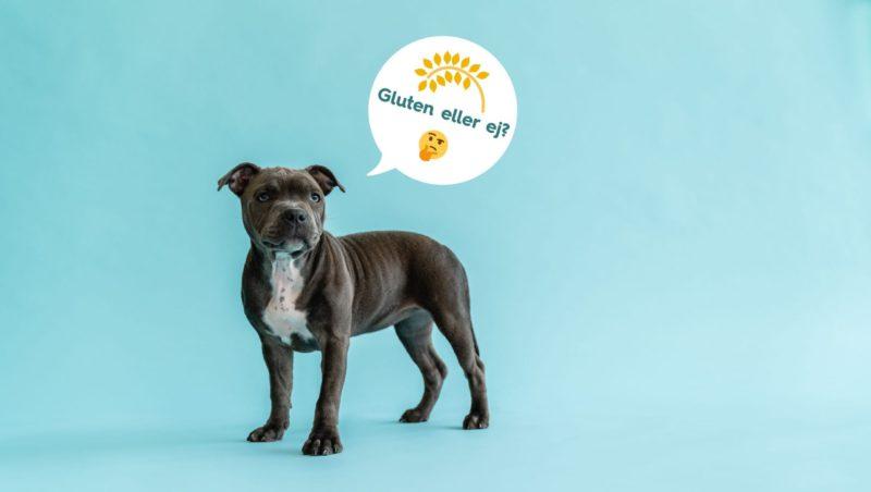 hund gluten eller ej?Vuffeli hundeblog