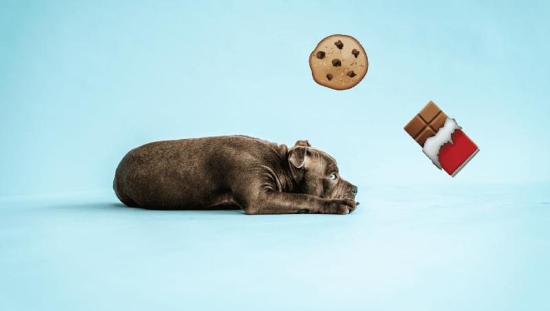 hunden må ikke spise chokolade eller kagerVuffeli hundeblog