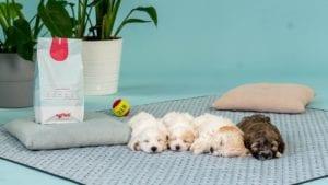 hundehvalpe ligger på tæppe med pose vuffeli