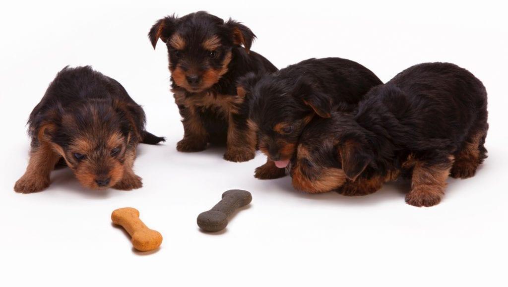 hunde kigger på knogleformet godbidderVuffeli hundeblog