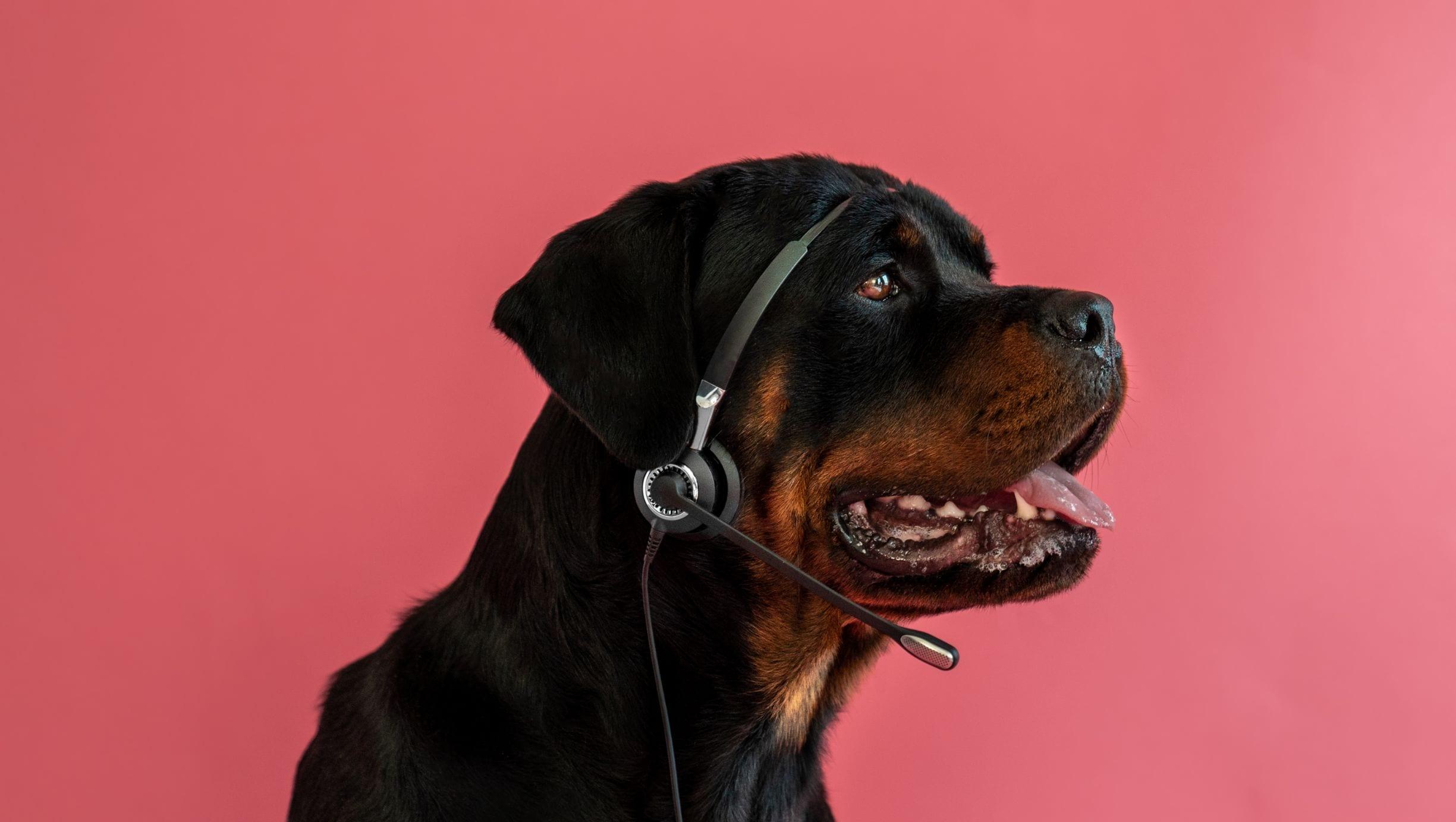 hund tager imod kundehenvendelser med høretelefoner og mikrofon påVuffeli hundeblog