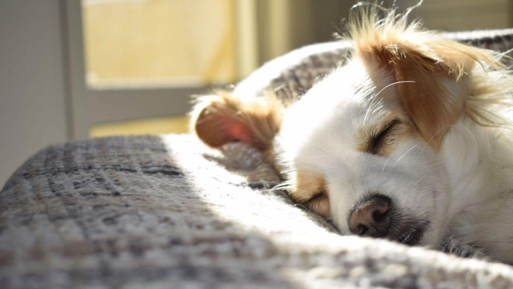 hund ligger i sengenVuffeli hundeblog