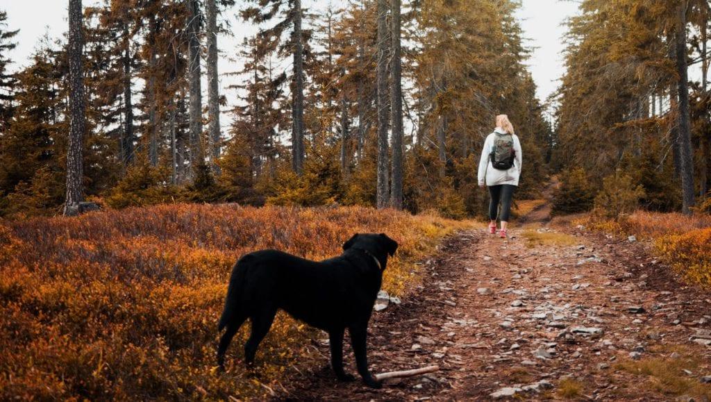 hund kigger på ejer i skoven