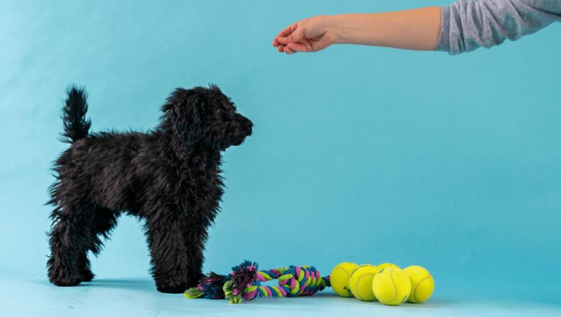 Sådan træner du din hundehvalpVuffeli hundeblog