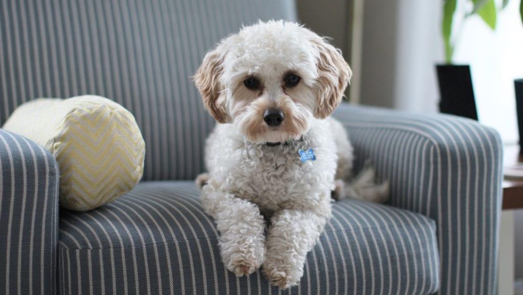 hund på sofaVuffeli hundeblog