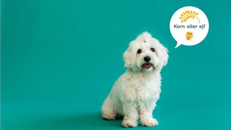 hund spørger om den skal have korn eller ejVuffeli hundeblog