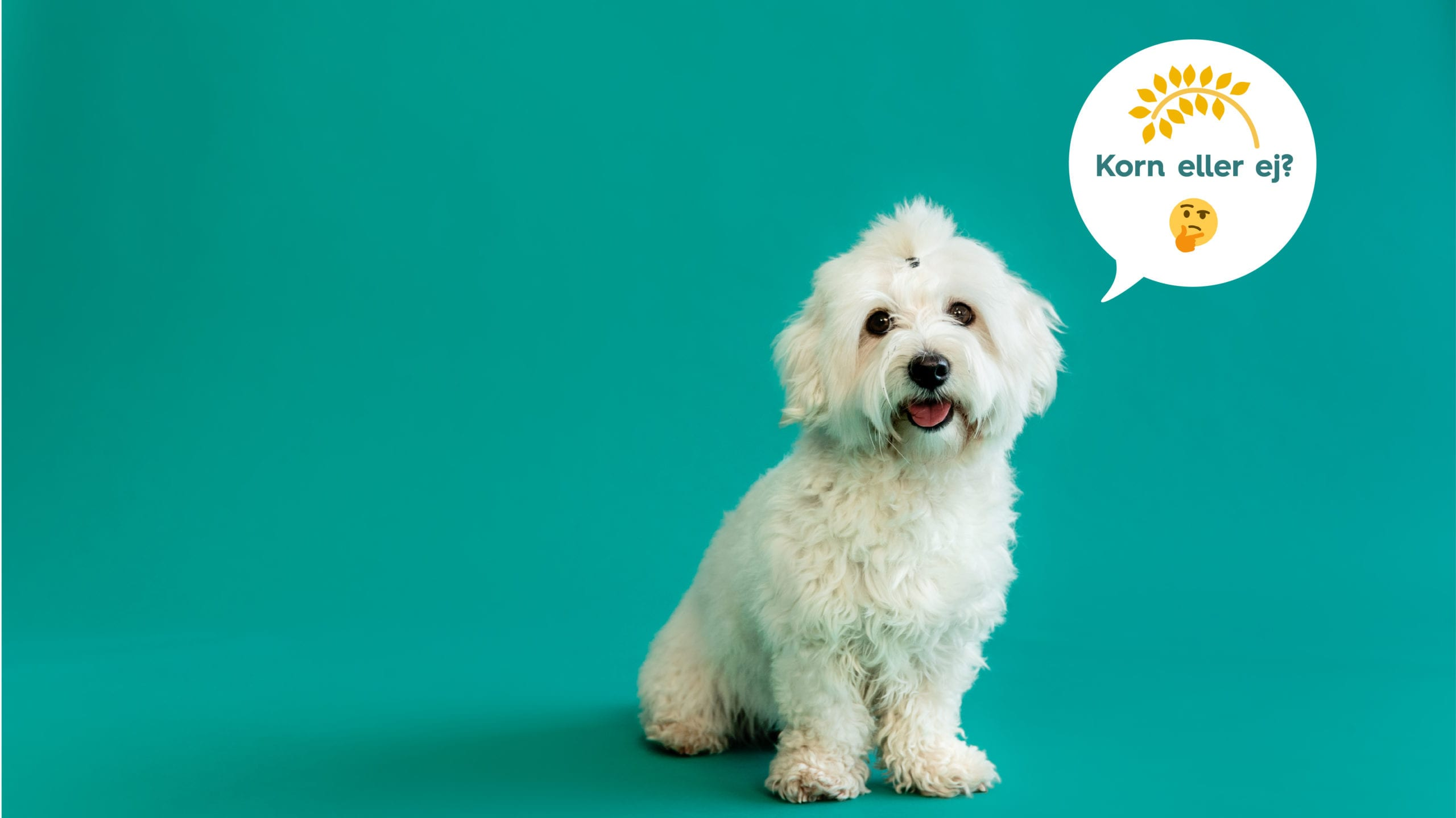 hund spørger om den skal have korn eller ej