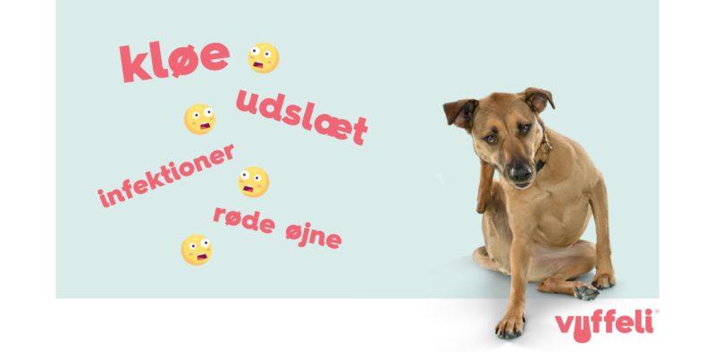 Allergi hos hunde: Kløe, udslæt, infektioner, røde øjneVuffeli hundeblog