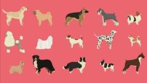 Hunderacer tegning