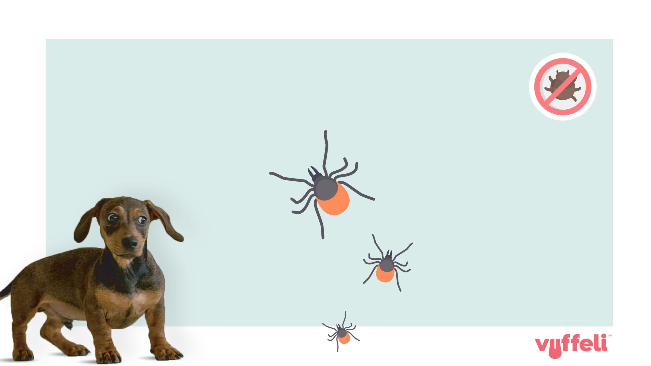 hund og tægeVuffeli hundeblog