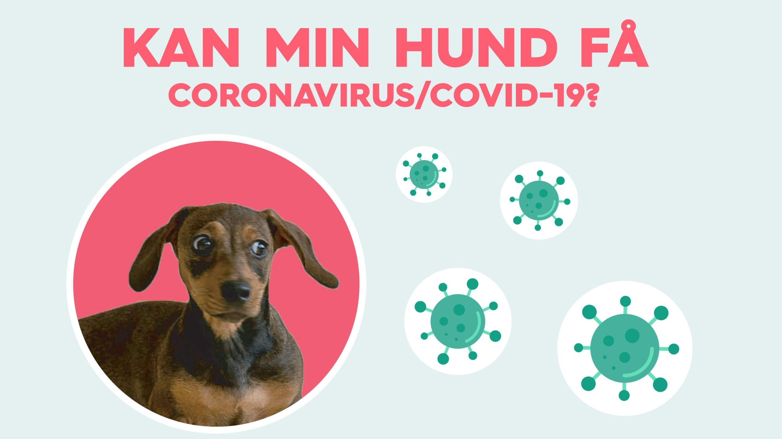 hund få coronavirus