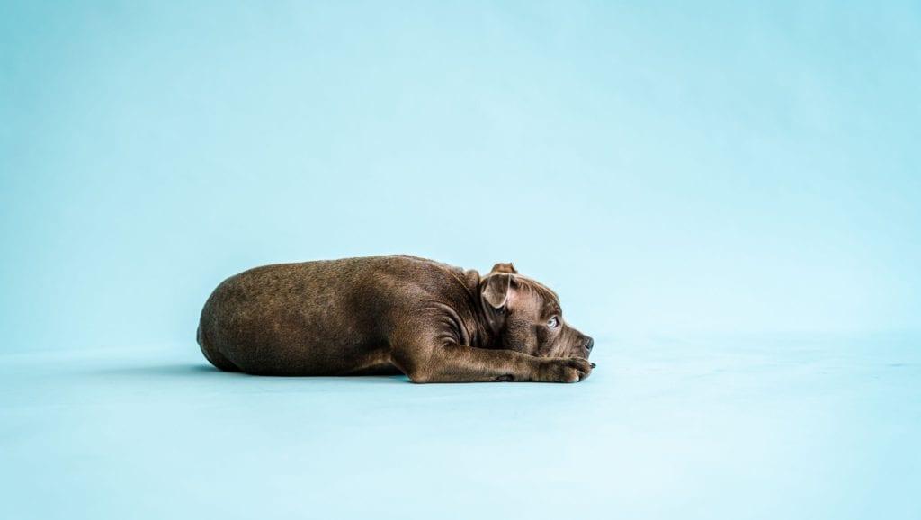 hund hviler sigVuffeli hundeblog