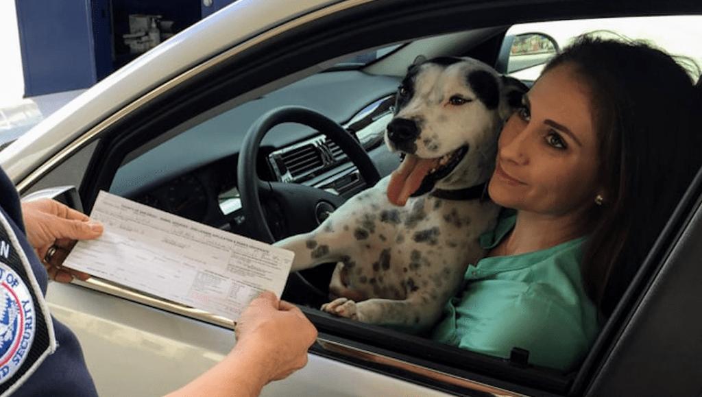 hund og ejer inde i bilen på forsæde