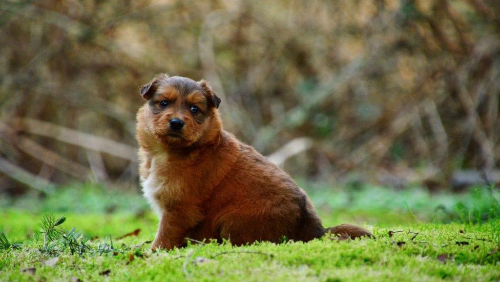 hvalp kigger fra græssetVuffeli hundeblog
