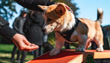 hund laver agility og får godbid