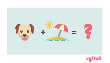 hvordan rejser man med sin hund?