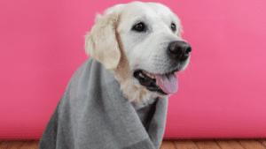 hund med tæppe på