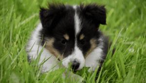 hund i græsset