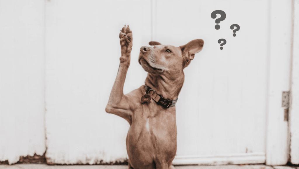 hund har et spørgsmål