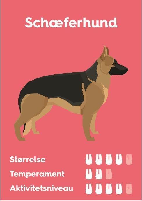 SchæferhundVuffeli hundeblog