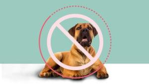 Nogle hunderacer er forbudte i Danmark