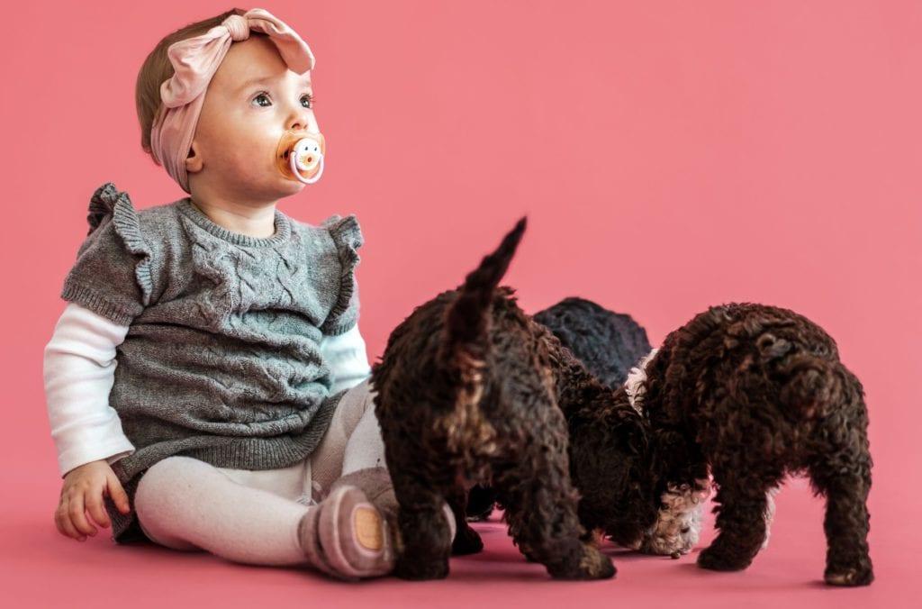 baby og hundehvalpe trives sammenVuffeli hundeblog