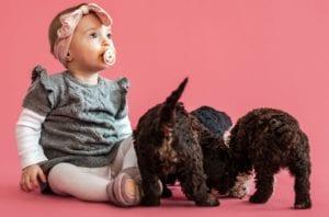 baby og hundehvalpe trives sammen