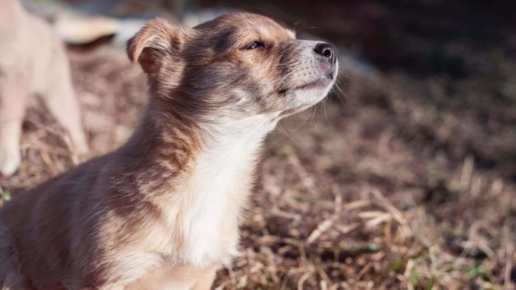 hund snuser til luftenVuffeli hundeblog