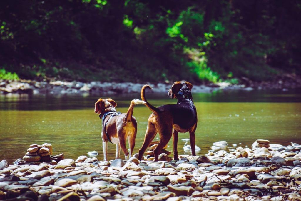 hunde kigger ud til åenVuffeli hundeblog