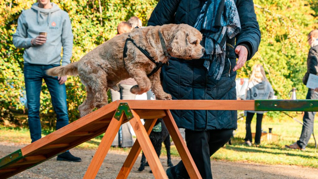 hund laver agilityVuffeli hundeblog