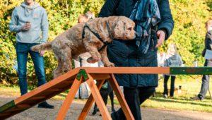 hund laver agility