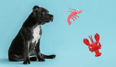 hunde må godt spise skaldyr