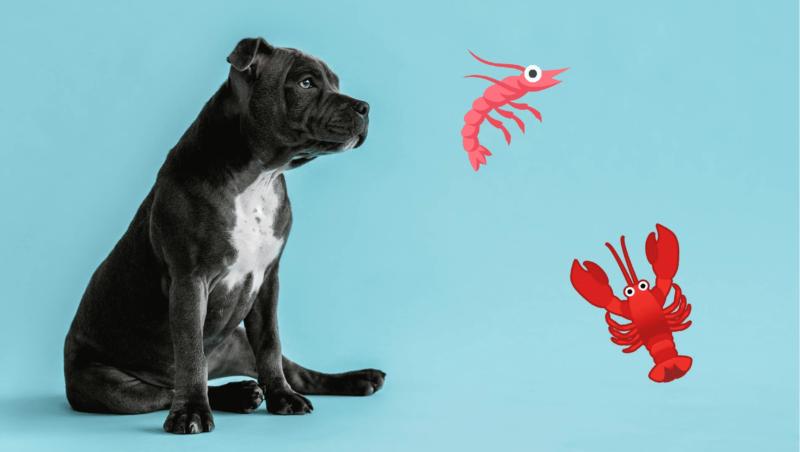 hunde må godt spise skaldyrVuffeli hundeblog