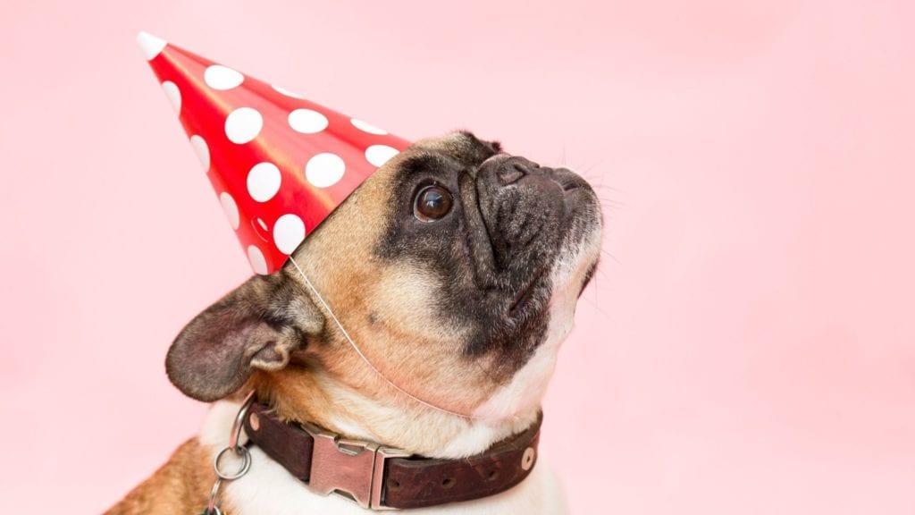 hund med partyhatVuffeli hundeblog
