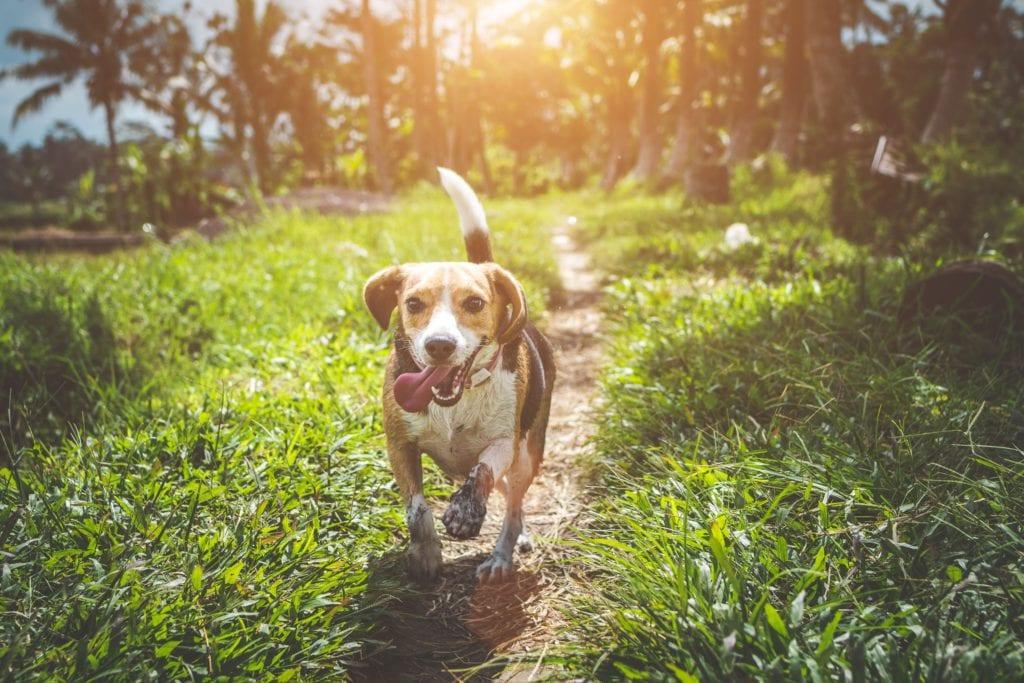 hund løber i naturen