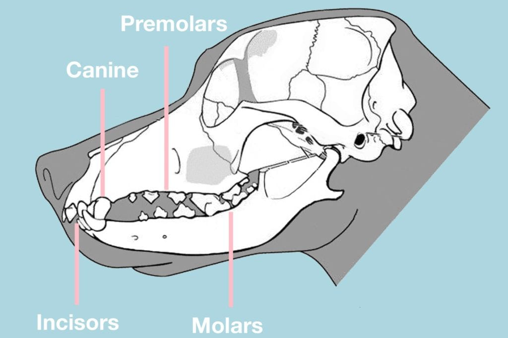 hundens tænderVuffeli hundeblog