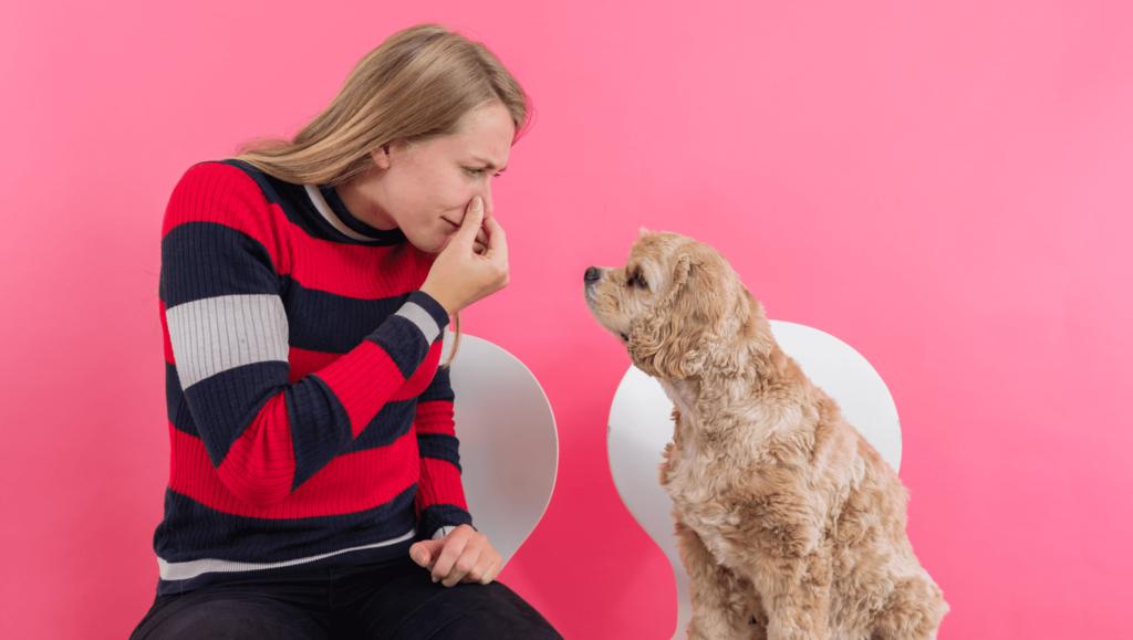 hund fordi den prutter og har diarreVuffeli hundeblog